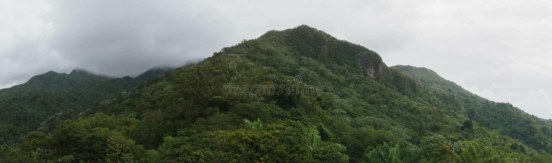 Пуща El Yunque стоковые изображения