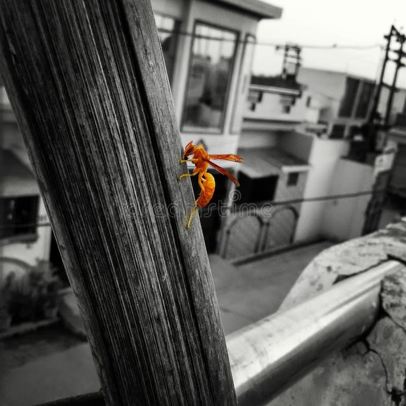 Пчела вытекая от темноты стоковая фотография