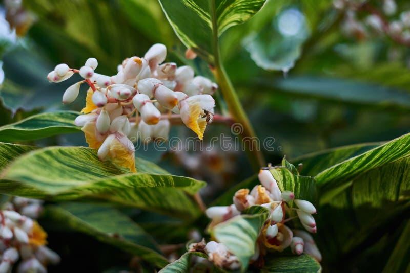 Пчела в красивых желтых белых цветках с зеленым цветом выходит в парк стоковая фотография