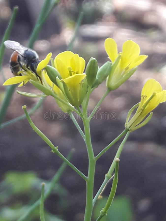 Пчела и цветки красивые стоковые фотографии rf