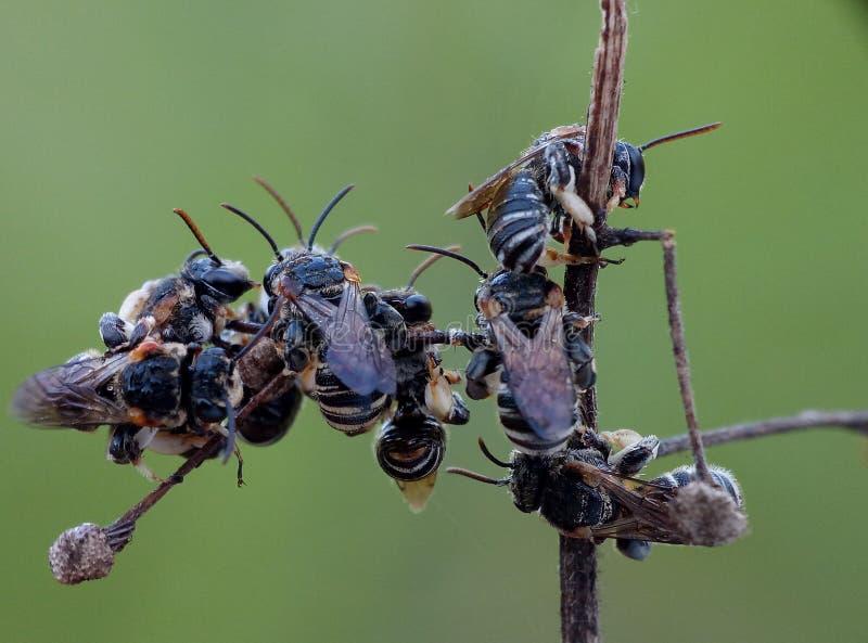пчела мечт стоковая фотография