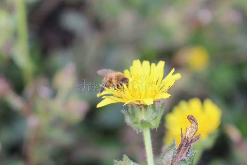 Пчела на работе стоковые фото