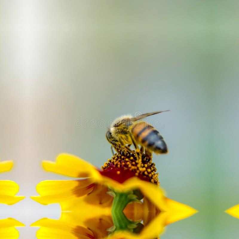 Пчела на холсте стоковые фото