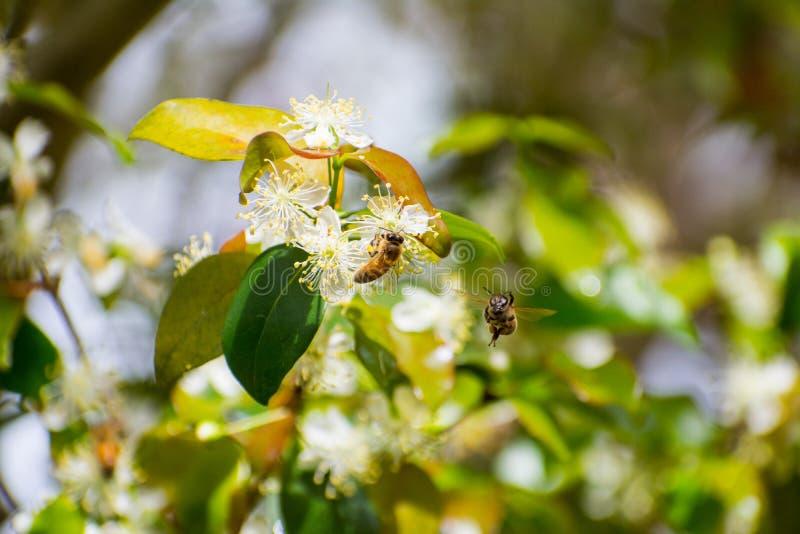 Пчела на цветках стоковая фотография