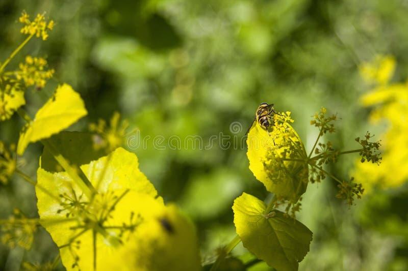 Пчела на цветке в общественном парке стоковое изображение
