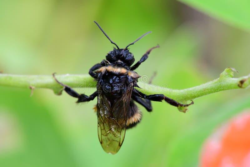 пчела путает влажная стоковые изображения rf