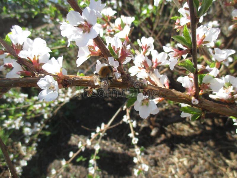 Пчела сидя на цветке стоковое изображение rf