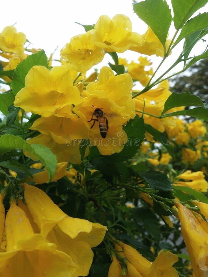 пчела цветка стоковые изображения rf