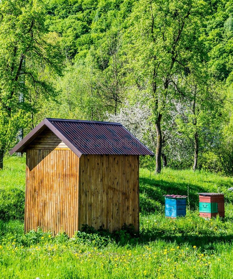 Пчеловодство в саде стоковые фотографии rf