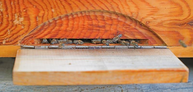 Пчелы входя в крапивницу которая сделана из сосны стоковое фото rf