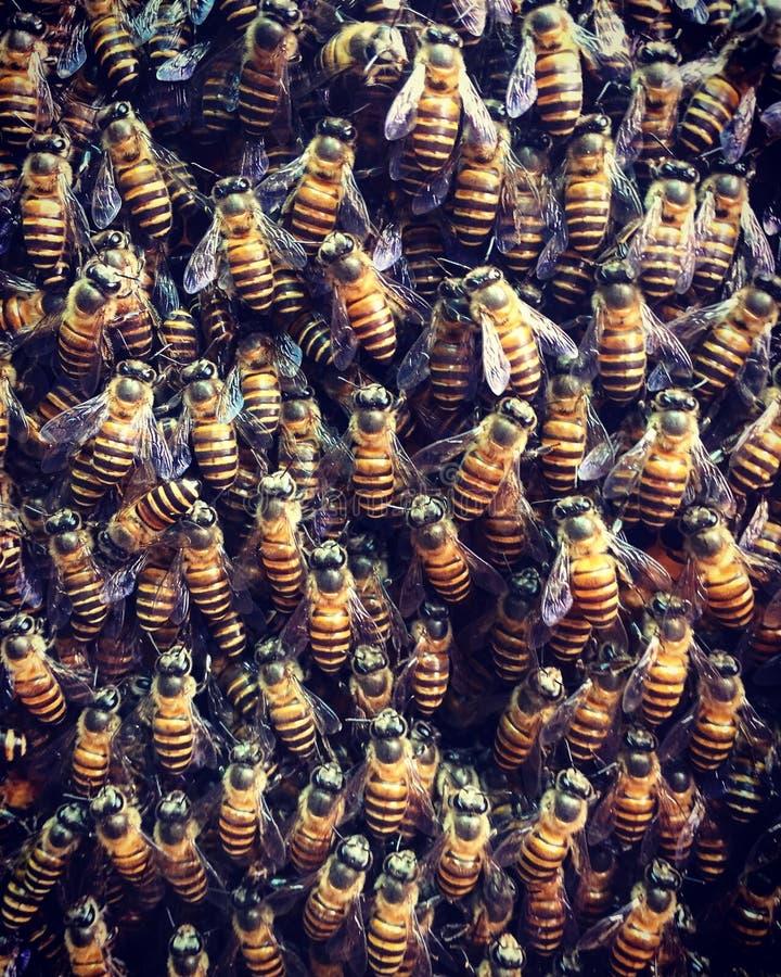 Пчелы имея потеху стоковые изображения