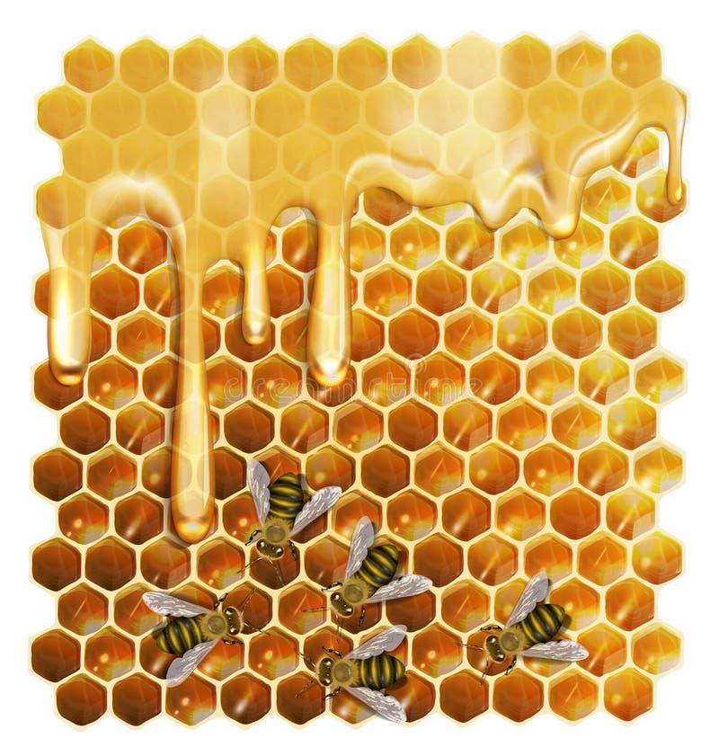Пчелы и мед на белой предпосылке иллюстрация штока