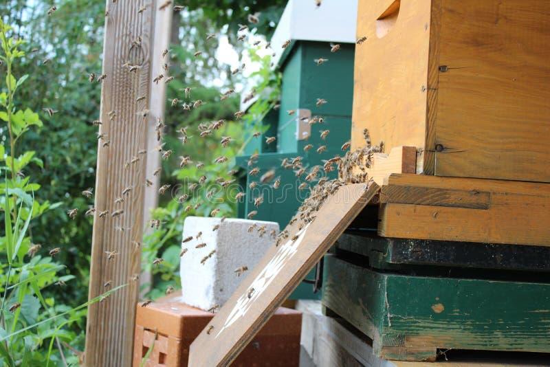 Пчелы летания стоковое изображение rf