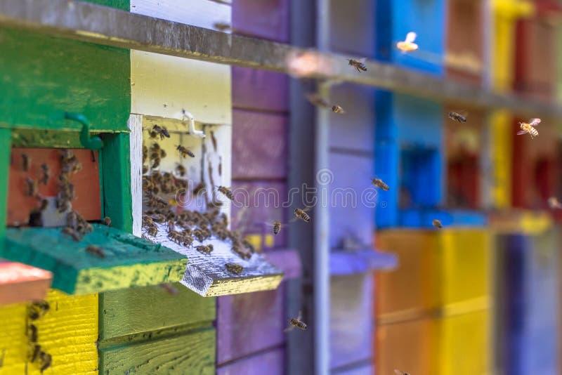 Пчелы летая к красочным ульям стоковые изображения rf