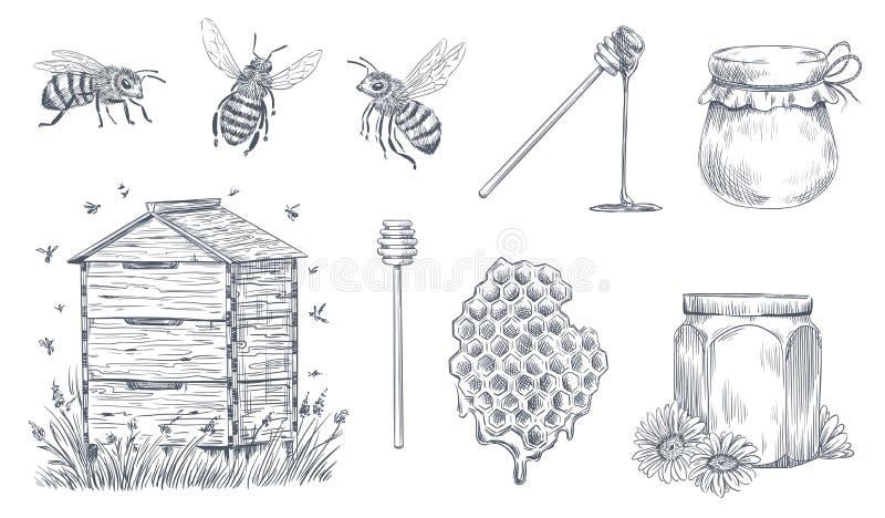 Пчелы меда гравируя Пчеловодство руки вычерченное, винтажная ферма меда и honeyed набор иллюстрации вектора цветня пчелы иллюстрация вектора