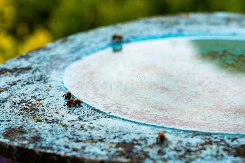 пчелы пьют воду в бердбате в цветочном саду в полдень стоковая фотография rf
