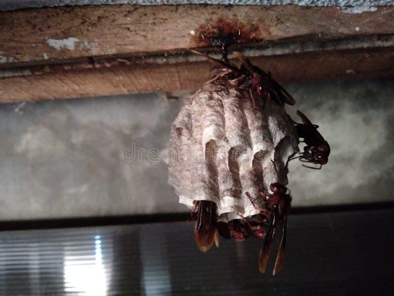 Пчелы работника стоковые изображения
