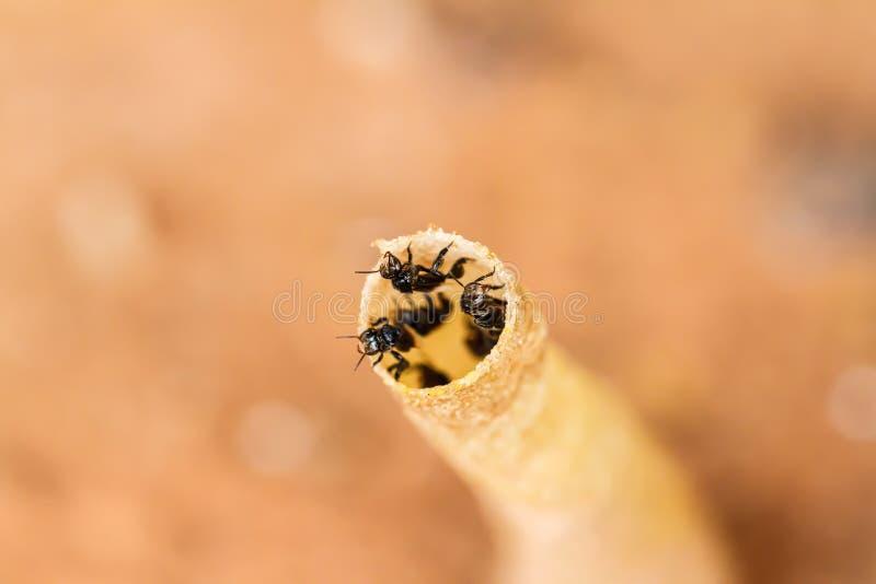Пчела в отверстиях стоковое фото rf