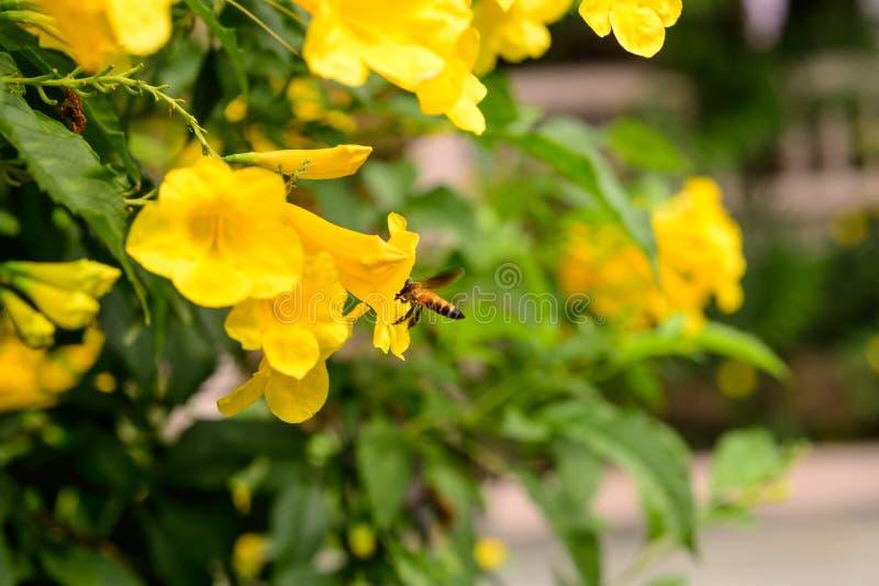 Пчела в парке сада стоковая фотография