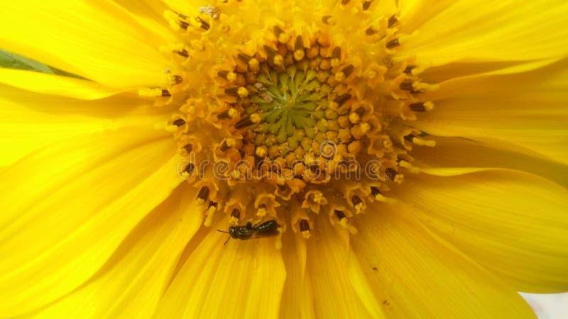 Пчела жизни хорошая стоковые изображения rf