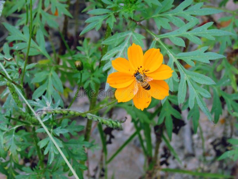 Пчела и полевой цветок стоковое фото rf