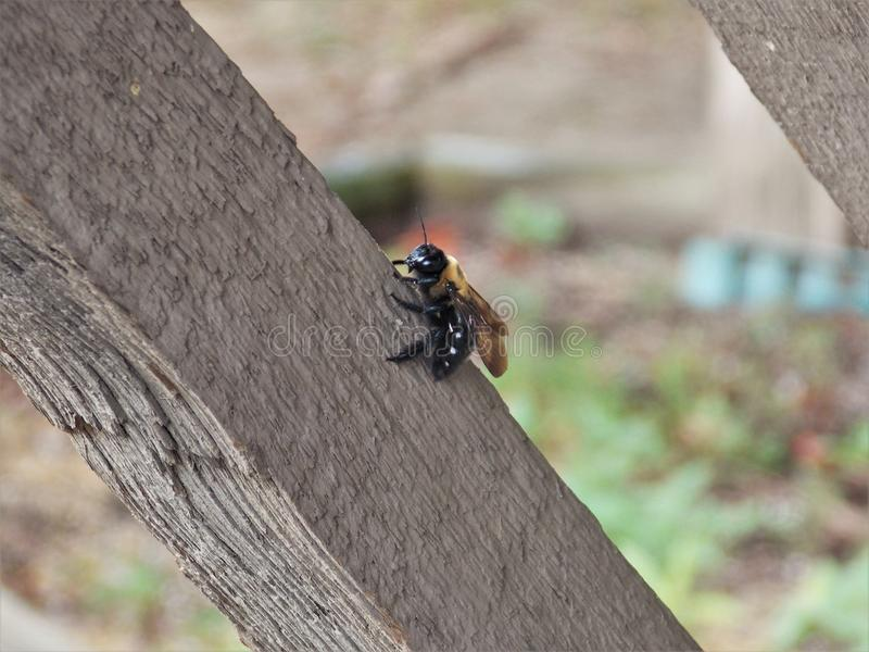 пчела многодельная стоковое изображение rf