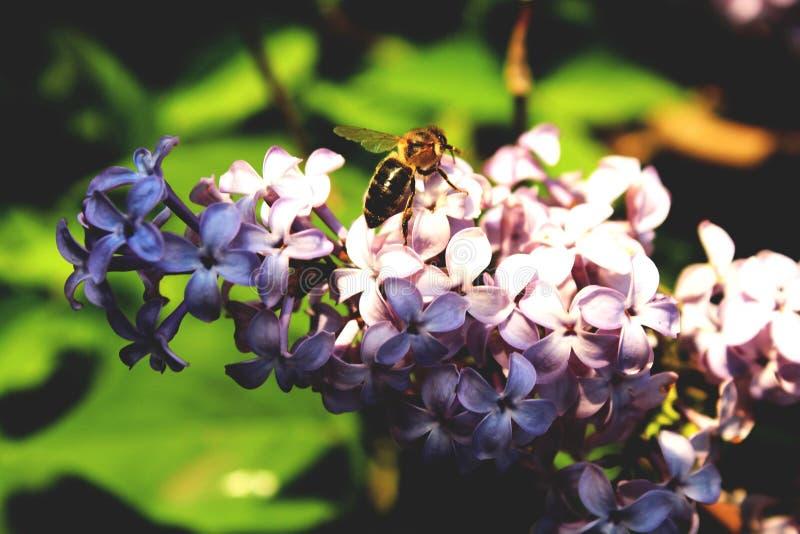 Пчела на ветви стоковое изображение