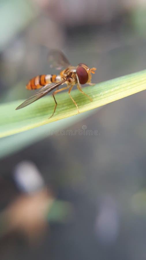 пчела немногая стоковое фото rf