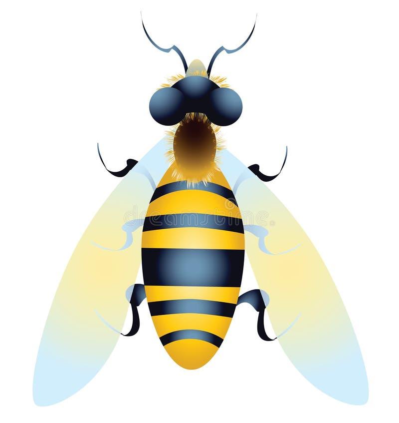 Пчела иллюстрация штока