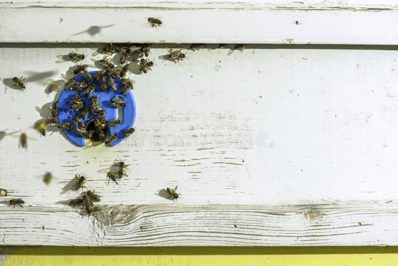 Пчелы входя в крапивницу стоковая фотография rf