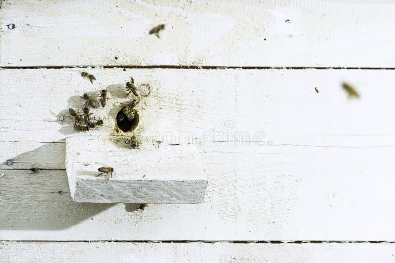 Пчелы входя в крапивницу стоковое фото