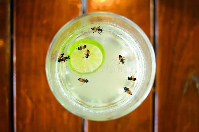Пчелы в чае лимона меда стоковая фотография