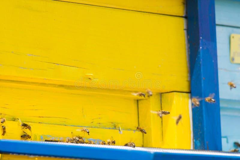 Пчелы летания входя в крапивницу пчелы стоковое фото rf