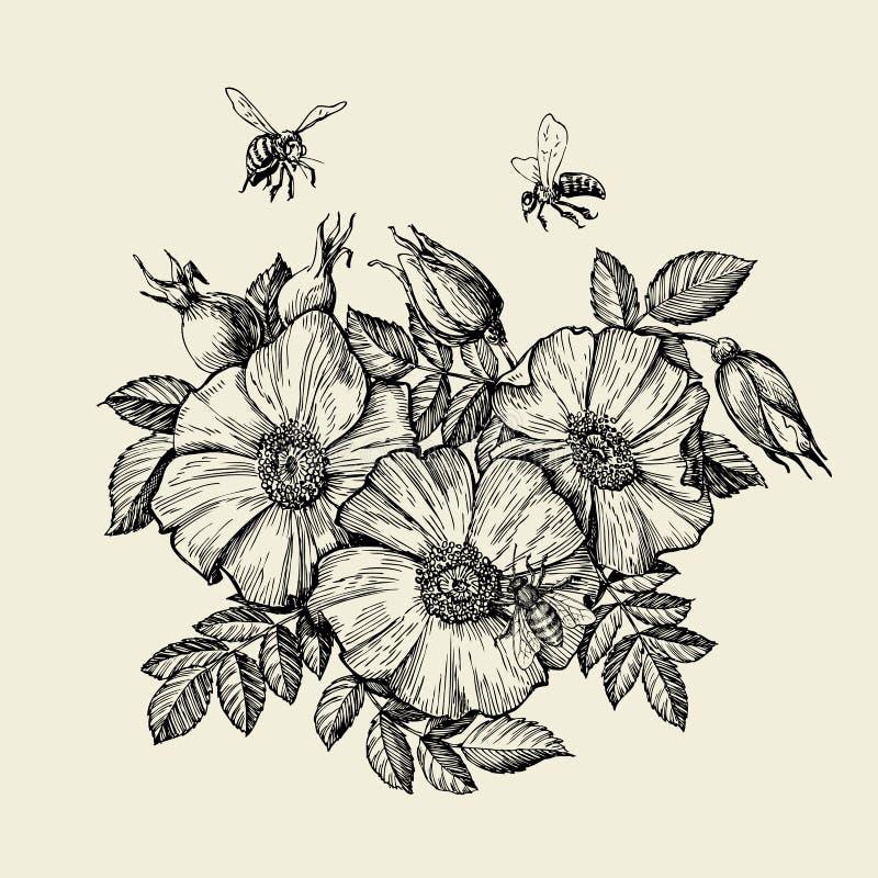 Пчелы летая к цветку Пчеловодство нарисованное рукой также вектор иллюстрации притяжки corel иллюстрация штока
