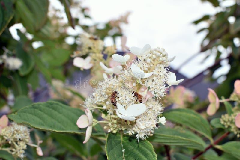 Пчелы жужжа вокруг дерева стоковая фотография rf