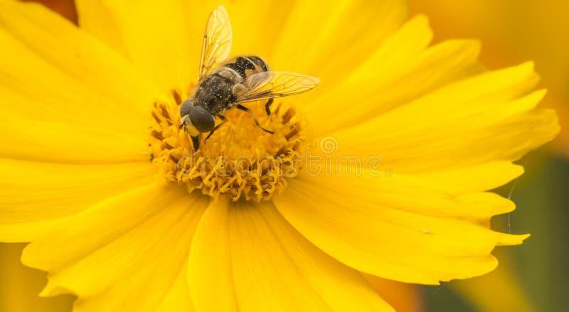 Пчелы и цветки стоковое фото