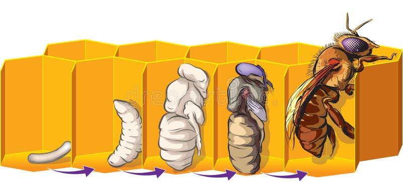 Пчелы иллюстрация вектора