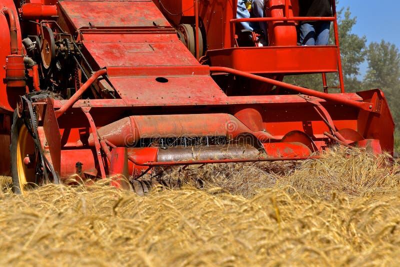 Пшеница будучи сжатым самоходным комбайном стоковые изображения