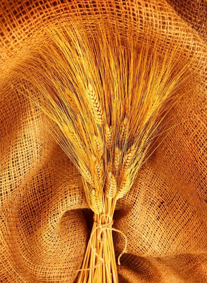 пшеница букета стоковые изображения