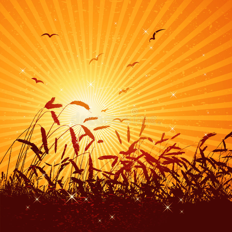 пшеница вектора поля иллюстрация штока