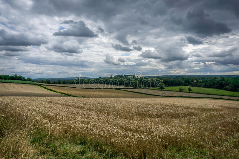 пшеница лета поля дня горячая стоковые фотографии rf