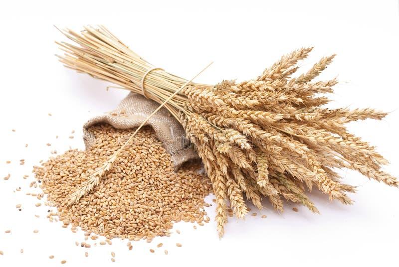 пшеница зерен ушей стоковые изображения rf