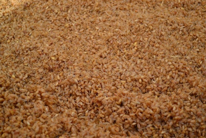 Пшеница и отруби стоковое фото