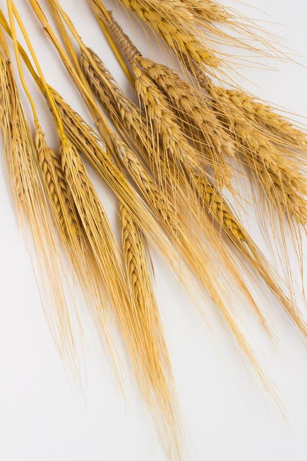 Пшеница и ячмень на белой предпосылке стоковые фото