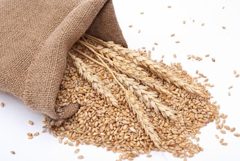 пшеница мешка разбросанная зерном стоковое фото rf