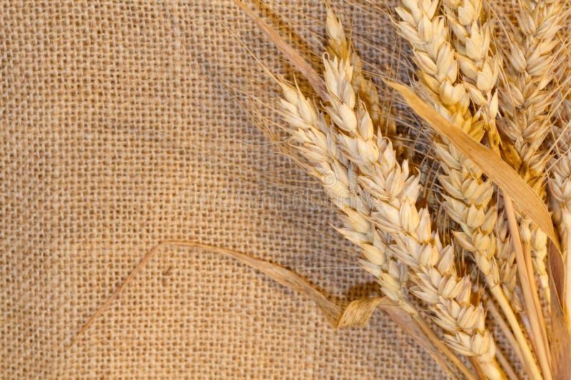 Пшеница на мешковине стоковые изображения rf