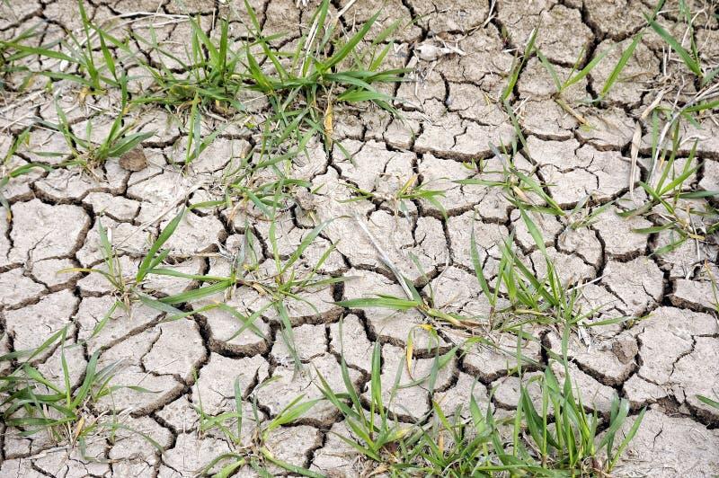 Астраханская область объявила о режиме ЧС из-за засухи