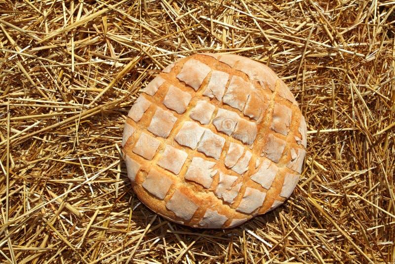 пшеница сторновки плюшки хлеба золотистая круглая стоковое фото rf
