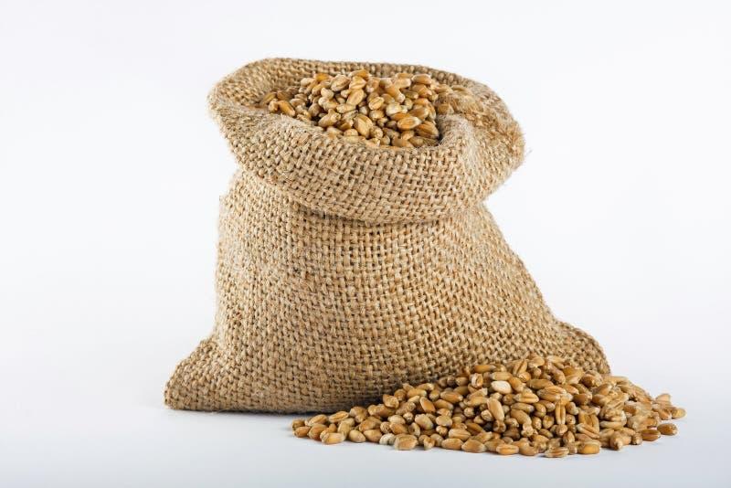 пшеница текстуры зерна конструкции предпосылки стоковое фото