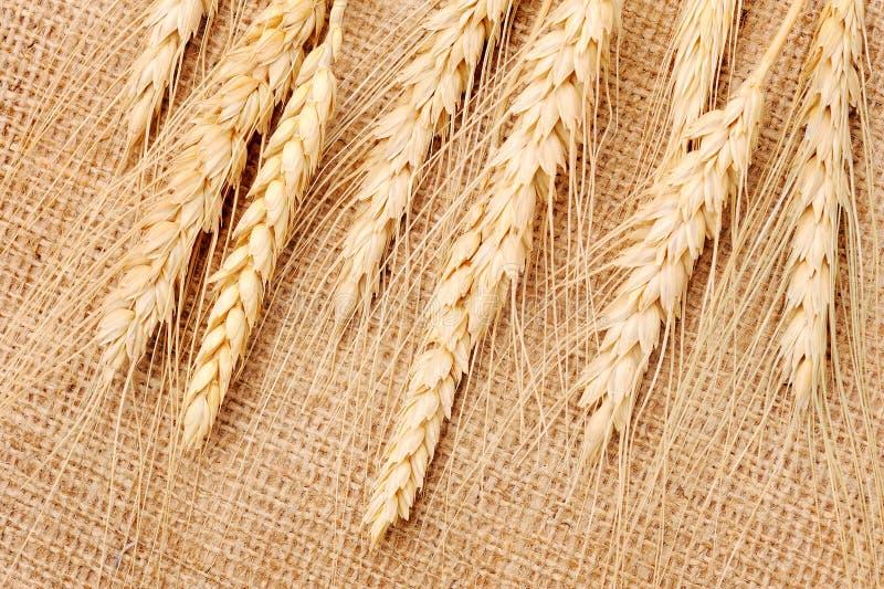 пшеница тканья ушей стоковые фото